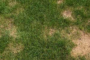 Grass with lawn disease in Burr Ridge Illinois that can be helped by the experts at Nutrimax