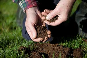 Soil from a lawn in Hindsdale Illinois in the hands of an expert Nutrimax technician checking to make sure that it is healthy